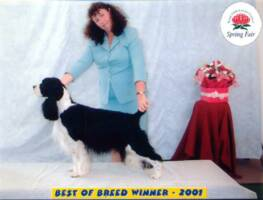 Marg and Fabio win Best of Breed Spring Fair 2001