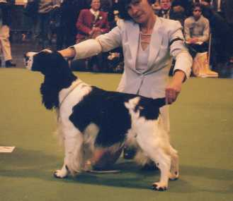 3rd place - Crufts 2000!!