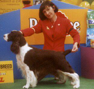 Best of Breed Adelaide Royal 2000