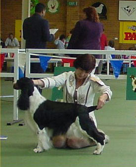 Intermediate in Show ESSCV November 2002